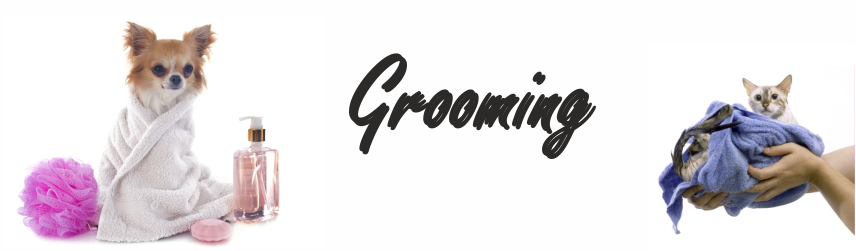 Zur Kategorie Grooming