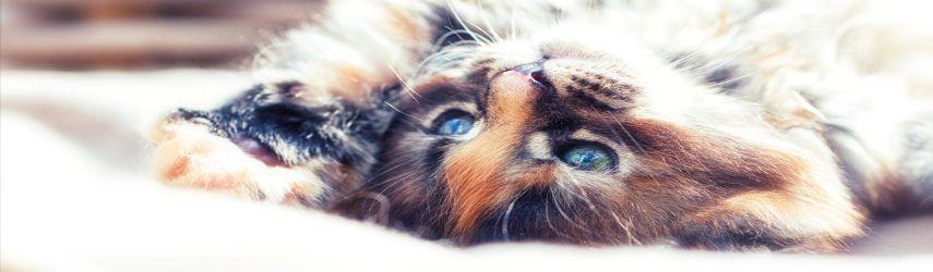 Zur Kategorie Katzenbedarf
