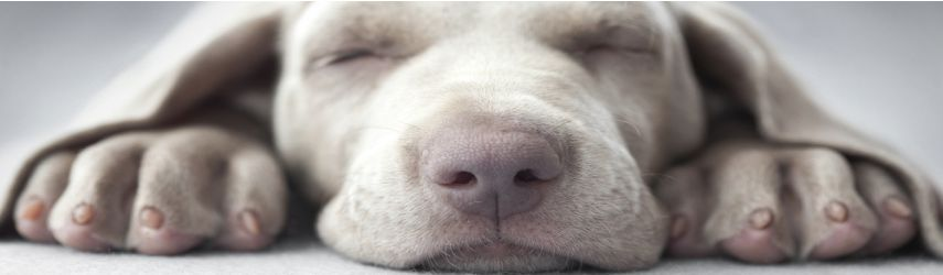 Zur Kategorie Hundebedarf