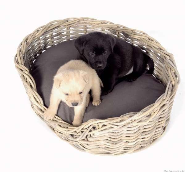 Surplus Rattan Hundekorb mit Kissen