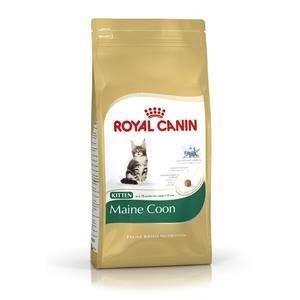 Royal Canin Maine-Coon 36 | Kitten